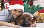 How to fase een kerst foto met kinderen en een hond