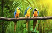 How to Take Care van papegaaien