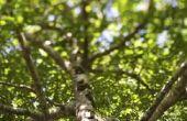Hoe te verankeren en het spel van een boom met touw