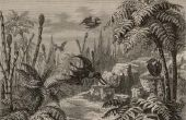 Wat Is een Dinosaur Plant?
