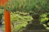 Arbor bogen in de Japanse stijl