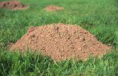 Wat te gebruiken voor mol aas