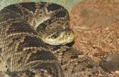 Wat voor soort slang Is zwart met een witte diamant-overzicht op zijn rug?