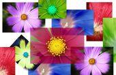 Hoe maak je een digitale foto Collage