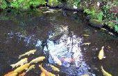 How to Build een waterval in een visvijver