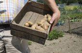 Wat doet het betekent wanneer een aardappel Plant bloemen?