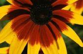 Kinder spirituele lessen met bloemen