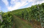 Kenmerken van Bourgondië wijn