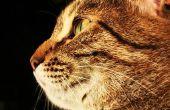 Droog kattenvoer voor katten met allergieën