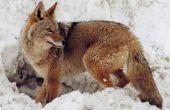 Hoe Indentify Wild dier Paw Prints