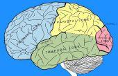 De verschillende delen van het menselijk brein