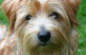 Hoe een zwangere hond ontwormen