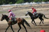 Ranitidine behandeling van maagzweren bij paarden