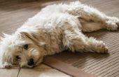 How to Get hond geur uit uw stofzuiger