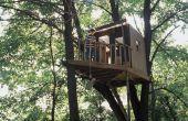 Kunt u bouwen een boomhut in een palmboom?