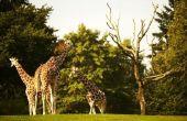 Welke dieren leven in het ecosysteem grasland?