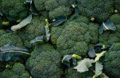 Welke insecten Spray kan ik gebruiken voor Broccoli?