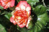 Verschillende soorten bloemen gevonden in India