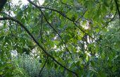 Tennessee Fruit & moer bomen