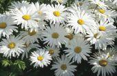 Het behouden van bloemen in hars