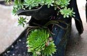 Kleine zwarte insecten op vetplanten