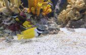 Het gebruik van Epsom zouten in vis-Aquariums