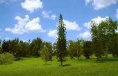 Hoe te schatten boom trimmen