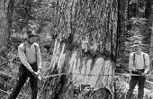 Hoe te kappen van een boom met een handzaag
