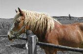 Hoe te verbeteren uw paard Topline