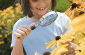 Halloween spelletjes en ideeën voor Daisy Girl Scouts