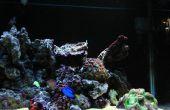 Wat heb ik nodig voor een 25 Galaten zoutwater aquarium?