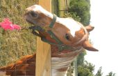 Symptomen van de slag bij paard