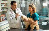 De gevolgen van Percocet voor honden