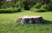 Ideeën voor een tuin met een boomstronk in de grond
