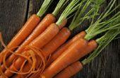 Lijst van wortelgroenten