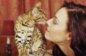Wat betekent het als een kat Nibbles op je hoofd?