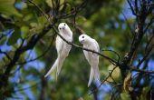 Hoe te houden vogels uit mijn rug veranda