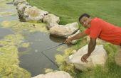 How to Grow Spirulina-algen