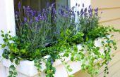De beste vaste planten te planten in bloembakken
