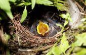 Houden van de vogels uit bloem Hanging Baskets