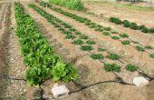 Hoe Plant een moestuin in rijen