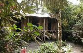 Hoe te overleven in het regenwoud