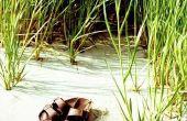 Hoe schoon stinkende Birkenstock sandalen