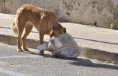 Tekenen dat een hond Is sterven aan diarree