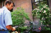 Recept voor biologische Weed Killer gemaakt met azijn
