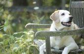 De beste vormgeving voor een tuin met honden