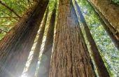 Hotels rond Redwood National Park
