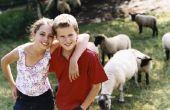 Hoe kinderen kunnen helpen op een familieboerderij
