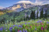 Hoe te rijden van Mount Rainier Nationaalpark