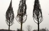 Hoe planten van een boom